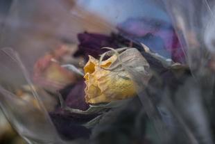 Violent Flowers#1