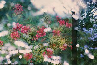 flower flower water light