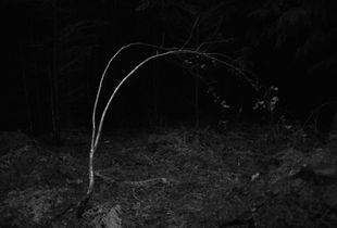 The Woods - 1