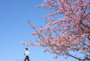 Spring follow us.