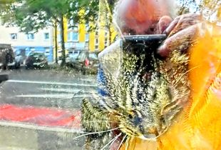 Cat behind glass