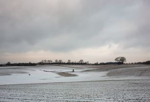 Winter cereal field with little snow