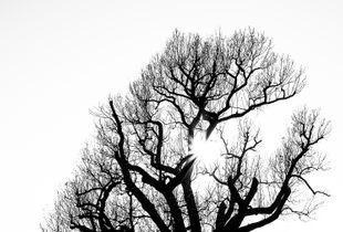 white trees 1