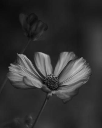 Mono Flower 1