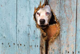 The blue-eyed dog