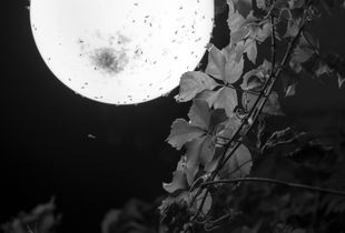 Torno Moon