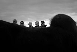 Cattle bazar
