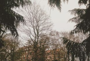 The Sensible: Impressions from Copenhagen #1