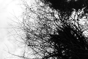 Tree Branches #3