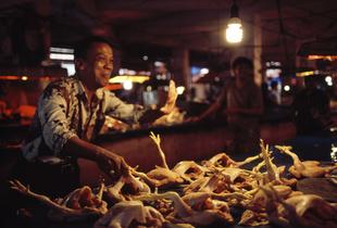 Market Boss - Sulawesi - Gorontalo Market