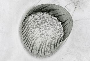 Sun #175, 2010, Lambda Print, Diasec, 80x80 cm (Ed 3+1), 50x50 cm (Ed 5+1) © Claus Stolz