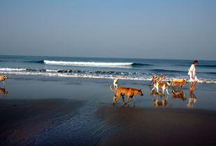 Early morning in Goa. India.
