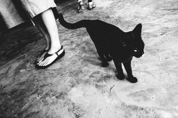 The Black Cat #01