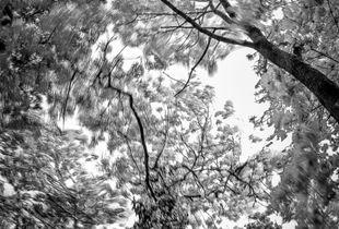 Winde in den Baumkronen
