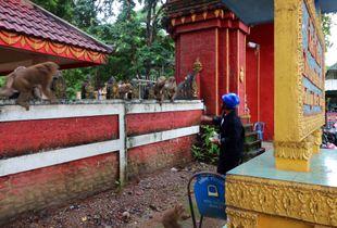 Thailand - a journey 5