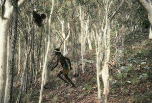 Black Birds and The Bushmen I