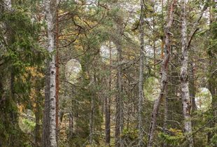 Forest Spots, Uskogstigen