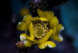 Fig tree flower.