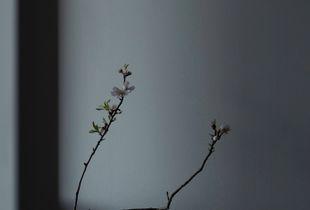 Almond Ikebana