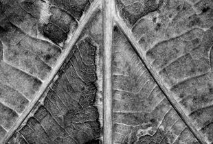 Anatomical Botanicus