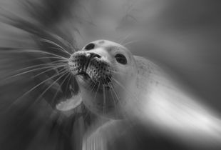 Playing baby seal
