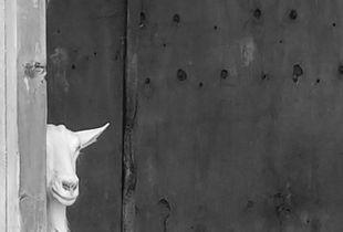 Vivan the Goat