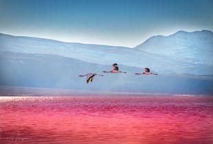 Blood Sunset, Laguna Colorada - Bolivia