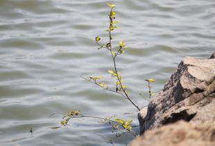 Water Grown