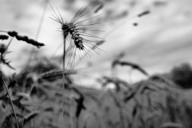 Looking through the grain