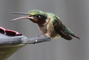 No Nectar for You!
