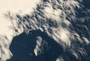 Eclipse Screen 9. Photographer's shadow, verticle.