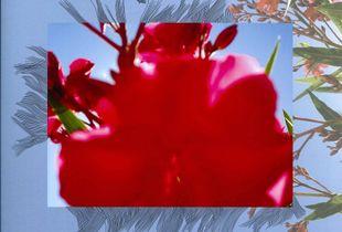 I fiori invisibili 1 / Nerium oleander, Carloforte. Digitally processed photo and ink drawing.