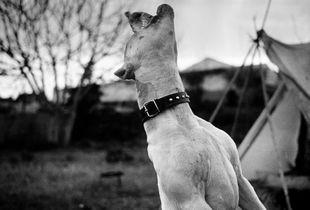Hungry dog. Badlands, South Mallorca Island.