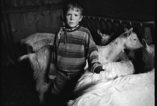 The farmer boy looking after the goats. Wintertime, Appenzell.