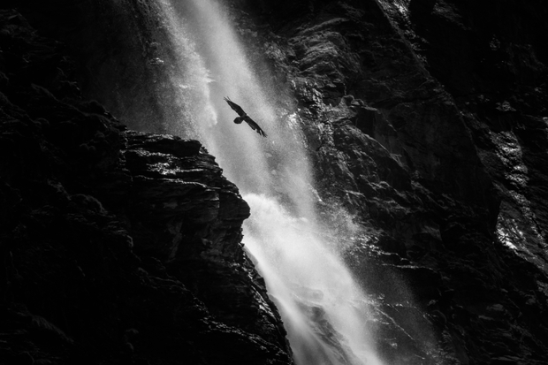 silhouette of vulture on waterfall background