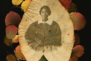Madonna. Unidentified African-American woman in elephant ear leaf with autumn leaves.