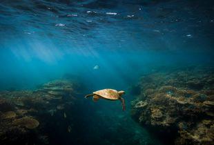 Reef Wandere