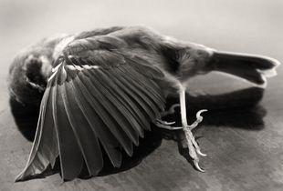 The Lost Bird_I