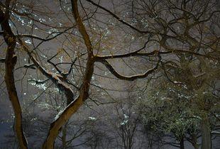 Night Trees of New York: Japanese Snow