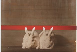 Supreme Champion Rabbit Matching Male / Female Pair