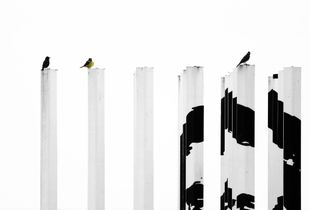 birds talks