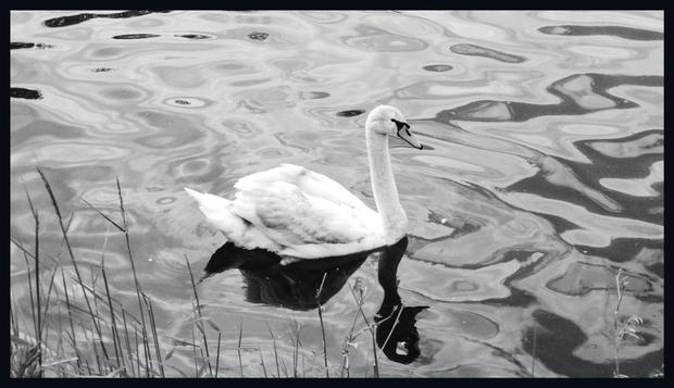 Lac du Héron