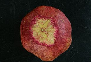 Cutting a wondrous pomegranate.