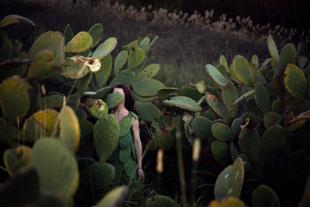 Prickly Pear, Fawkner