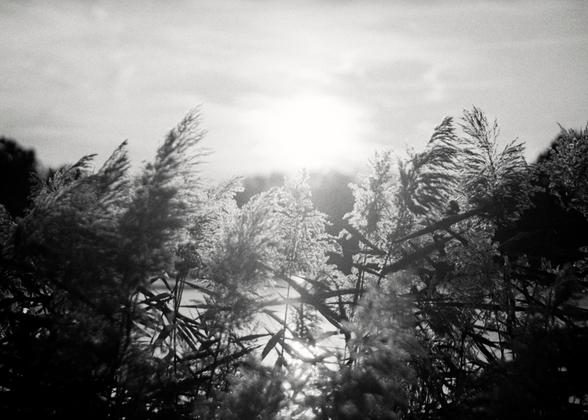 The Sun's Mist