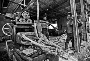 Ecuadorian children work a sugarcane mill