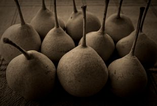 Greek pears