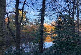 Central Park Golden Hour