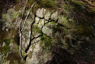 FORSHADOWING. Verb. - Language group: FOREST     Meaning: Telling a tree story to the nearest rock