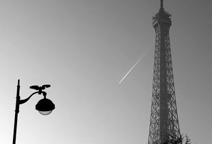 The Eiffel Tower and the Bird_1
